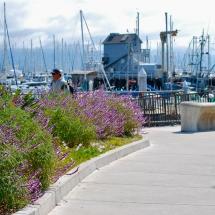 Breakwater-Restaurant-harbor-view